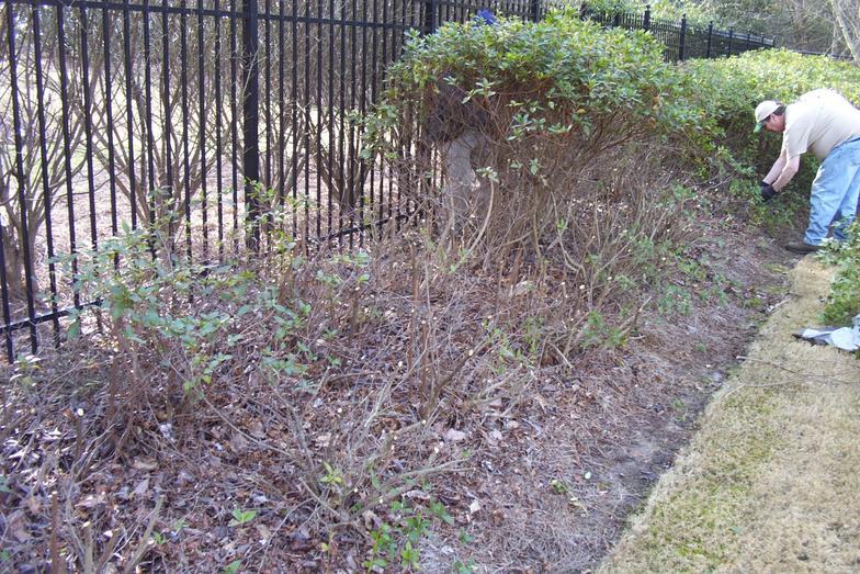 Pruning Guru Inc Services Atlanta Pruning And Landscape Service